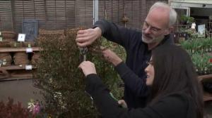 Gardening: Pruning 101