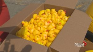 Queen's Park gets punked with hundreds of rubber ducks