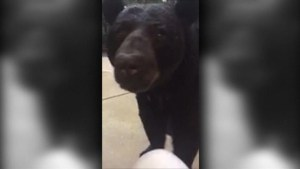 Florida woman comes face to face with a curious bear