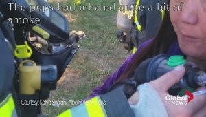 Puppies saved from fire by new pet-sized oxygen masks