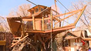 Father fighting city hall over $30,000 backyard treehouse