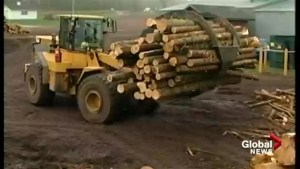 New Brunswick coming to grips with sobering reality of softwood lumber tariffs