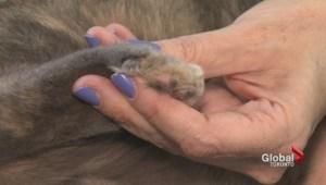 International effort to stop declawing cats results in renewed calls to end practice in Ontario