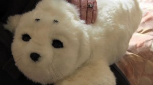 Researchers explore high-tech solution to aging, dementia – robots