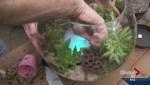Gardening: Misty Bowl
