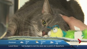 Adopt-A-Pet: Elmo the Cat