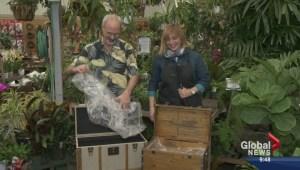 Gardenworks: Tropical trucks