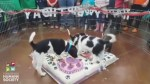 Video of Edmonton puppy cake smash goes viral