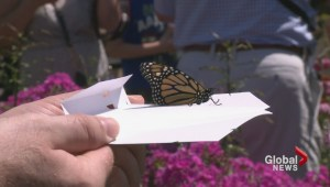 Butterfly Release a happy event in Langley