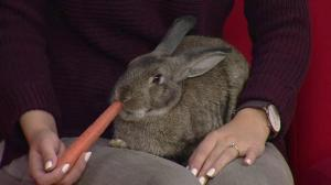 Adopt a Pet: Billy the bunny