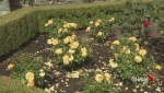 VanDusen Gardens scramble to care for plants during water restrictions