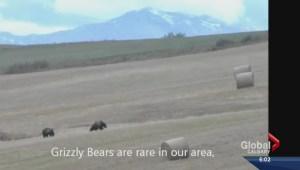 Okotoks grizzlies