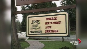Whale watching accident: What happened?