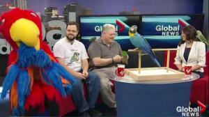 Edmonton Pet Parrot Association – Annual Show