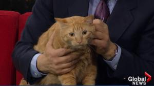 Edmonton Humane Society: Fireball and Mace