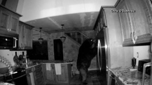 Bear captured on camera ransacking house for 6 hours