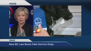 New rules governing service animals in B.C.