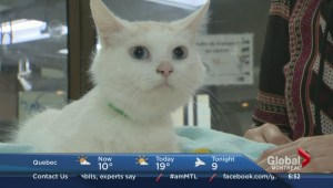 Adopt-A-Pet: Lychee the cat