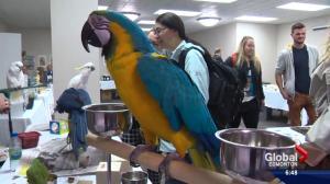 Parrot pandemonium hits Edmonton