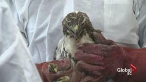 Avian flu forces closure of bird society