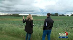 Plans to develop farmland east of Edmonton raises concerns