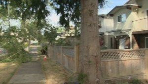 East Vancouver residents critical of city's maintenance of old trees