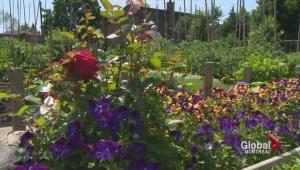 Seniors' community garden to celebrate 40 years