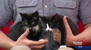Pet of the Week: Spike and Jack