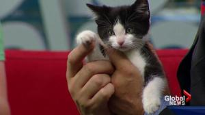 Pet of the Week: Pikachu