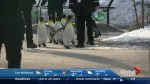 Penguin walk at the Calgary Zoo