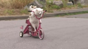 RAW: Dog riding a scooter draws crowds in North Vancouver