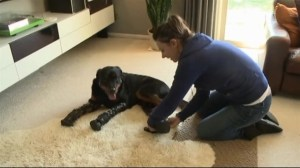 Amputee dog gets new lease on life with four prosthetic limbs