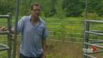 Saint-Lazare farmer searches for runaway cattle
