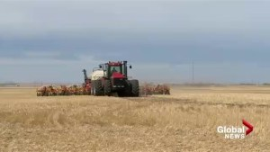 Farmers in southern Alberta grateful for moisture over long weekend