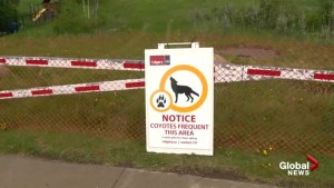 More pathway closures after coyotes get more aggressive