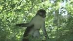 Massachusetts Zoo closes after monkey escapes enclosure