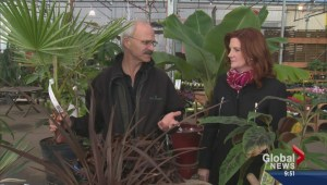 Gardening: Winter Plant Protection