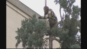 Tree man finally descends from 80-foot tree in Seattle