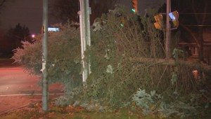 Strong winds across GTA knock down power lines, topple trees