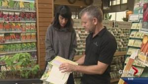 Gardening: Vegetable Seed Planning