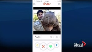 Wombat looking for love with online dating
