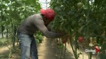 Drought struggles for farmers