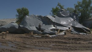 Cornell dairy farm faces significant storm damage