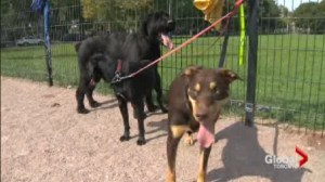 Only 39 per cent of Toronto dog owners have licenses, yet only 8 tickets handed out this year,.