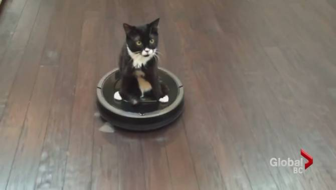 Cat And Roomba Video