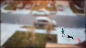 Security camera records dog's violent attack on 7-year-old Texas boy