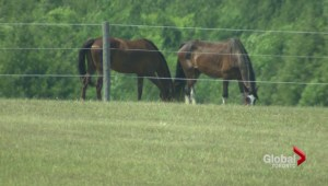 Owner of horse trapped at Ontario farm, accused of neglect fights to get animal back