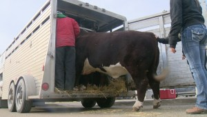 Agribition clean up gets underway