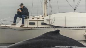 Photo showing man looking at phone instead of nearby whale goes viral