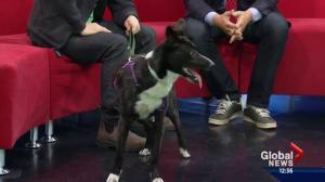 Pet of the Week: Jasmine